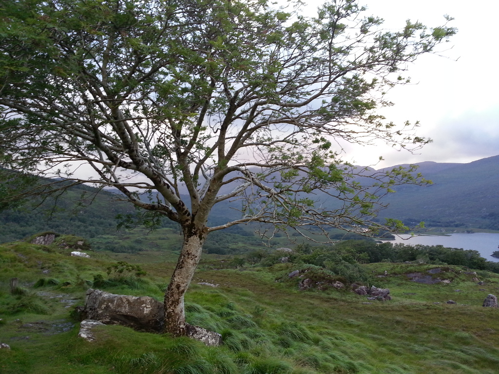 mountain tree and lake