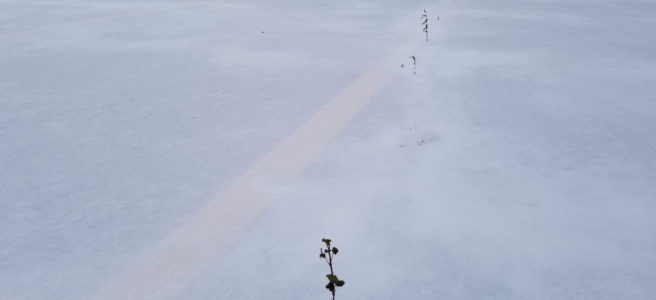 Small plant growing in the snow